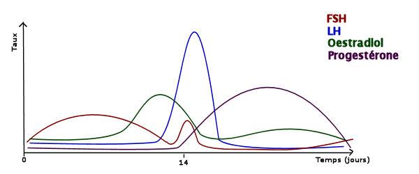 variations_hormonales_cycle